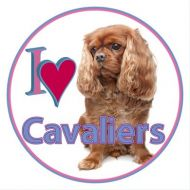 Cavalier Car Sticker-All Four Colours