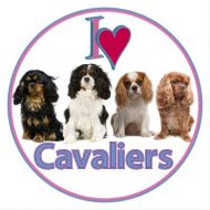 Cavalier Car Sticker - Four Cavaliers