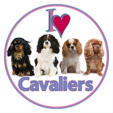 Cavalier Car Sticker - Four Cavaliers