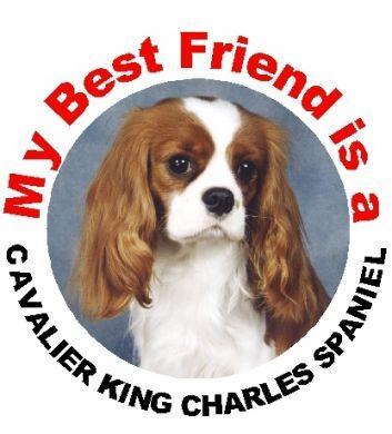 Best Friend Cavalier Car Sticker In All Colours