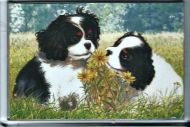 Gentle Tricolour Pups Watercolour Fridge Magnet