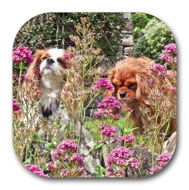 The Garden Girls Coaster