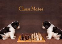 Chess Mates Blank Notelet Cards
