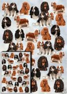 Cavalier General Gift Wrap