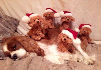 Christmas Treacle