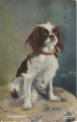 The Royalist 1913 Vintage Postcard A
