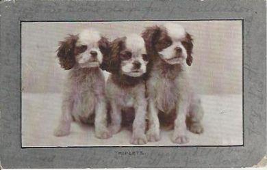Triplets 1911 Vintage Postcard