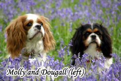 Molly And Dougall